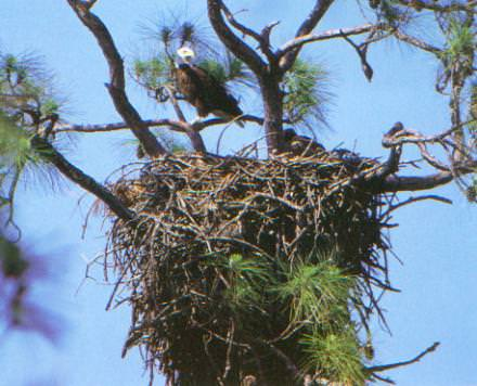 Harbour-Ridge-Eagles-Nest