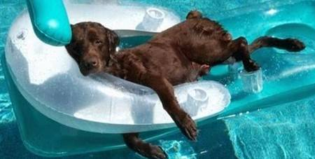 dog-floating-pool