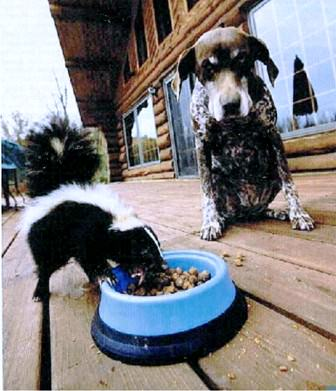 dog-skunk-food