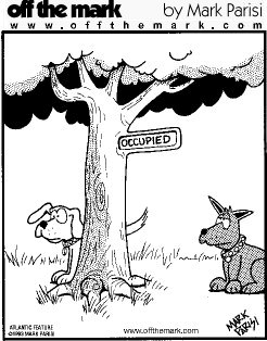 dog-tree-occupied