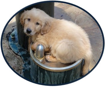 puppy-water-fountain